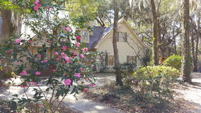Flores cor-de-rosa que florescem no sol Foto de Stock Royalty Free