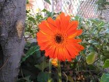 Flores, cor, vila, beleza imagem de stock royalty free