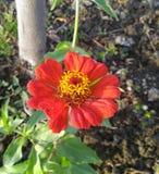 Flores, cor, vila, beleza foto de stock royalty free