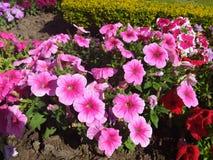 Flores, cor, vila, beleza fotografia de stock