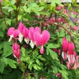 Flores Coração-dadas fôrma fotografia de stock