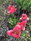 Flores coralinas Imagen de archivo