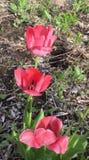 Flores coralinas Fotos de archivo