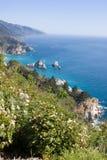 Flores costeras Imagen de archivo libre de regalías