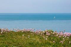 Flores costeras y paisaje Imagen de archivo