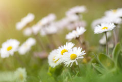 Flores crecientes Foto de archivo libre de regalías