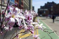 Flores cuadradas de la unión Imagen de archivo libre de regalías
