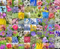 Flores cultivadas decorativas collage Fotos de archivo libres de regalías
