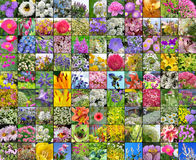 Flores cultivadas decorativas collage Imagem de Stock Royalty Free