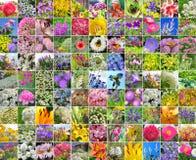 Flores cultivadas decorativas collage Imagens de Stock