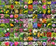 Flores cultivadas decorativas collage Imagens de Stock Royalty Free