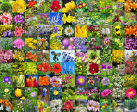 Flores cultivadas decorativas collage Fotografia de Stock