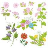 Flores cultivadas, grupo Fotos de Stock Royalty Free