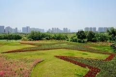 Flores cultivadas no teste padrão do pentacle no gramado perto da cidade moderna Imagens de Stock