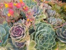 Flores curiosas Fotografía de archivo