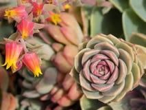 Flores curiosas fotografía de archivo libre de regalías