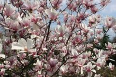 Flores da árvore imagem de stock