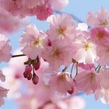 Flores da árvore Fotos de Stock Royalty Free