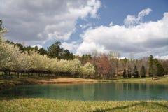 Flores da árvore da mola em torno de um lago fotos de stock