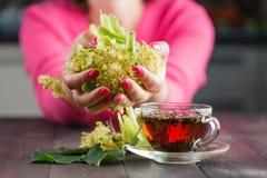Flores da árvore de Linden usadas para o chá da garganta inflamada fotografia de stock