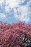 Flores da árvore de maçã do paraíso Imagens de Stock Royalty Free