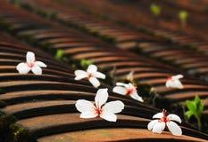 Flores da árvore de Tung Imagem de Stock Royalty Free