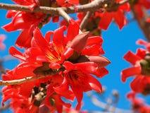 Árvore de seda imagem de stock