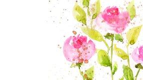 Flores da aguarela fotos de stock