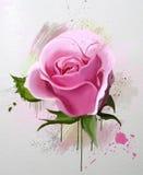 Flores da aguarela Coleção das rosas Fotos de Stock