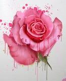 Flores da aguarela Coleção das rosas Imagens de Stock