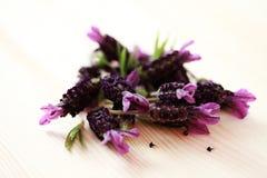 Flores da alfazema Fotografia de Stock Royalty Free