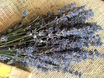 Flores da alfazema no ramalhete Fotos de Stock Royalty Free