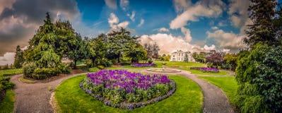 Flores da alfazema no viveiro fotografia de stock royalty free