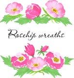 Flores da aquarela do vetor Entregue a flor cor-de-rosa selvagem tirada, as folhas, os botões e a grinalda simétrica da baga para Foto de Stock Royalty Free