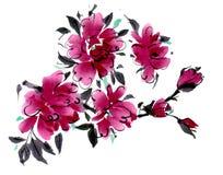 Flores da aquarela isoladas em um fundo branco Fotografia de Stock