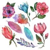 Flores da aquarela no fundo branco Imagens de Stock