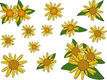 Flores da arnica. ilustração do vetor