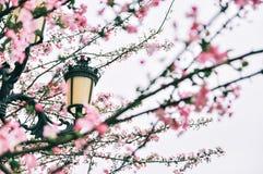 Flores da begônia com rua fotografia de stock