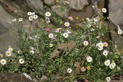 Flores da beleza foto de stock