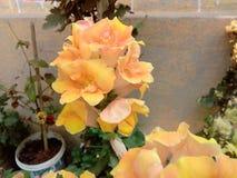 Flores da beleza foto de stock royalty free