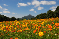 Flores da borda da estrada imagem de stock royalty free