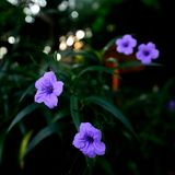 Flores da borda da estrada Imagens de Stock Royalty Free
