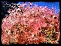 Flores da borda sul Imagens de Stock