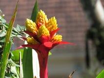 Flores da bromeliácea fixadas na árvore imagens de stock