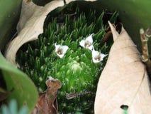 Flores da bromeliácea fixadas no assoalho imagens de stock royalty free