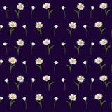 Flores da camomila com haste verde e folhas em um fundo escuro-azul ilustração do vetor