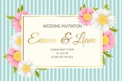 Flores da camomila do áster da margarida do convite do casamento Imagem de Stock Royalty Free