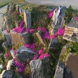 Flores da campânula crescidas nas pedras Fotografia de Stock Royalty Free