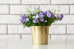 Flores da campânula em um potenciômetro dourado foto de stock royalty free