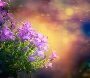 Flores da campainha no fundo da natureza do por do sol fotografia de stock royalty free